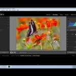 How to Use Lightroom 4 for Beginners